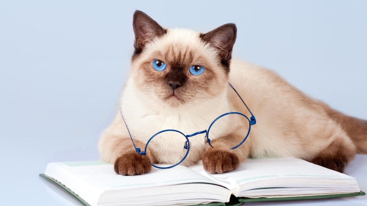 猫が本を読んでいる画像